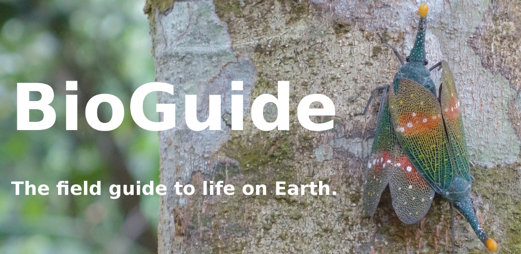 BioGuide - The field guide to life on Earth.